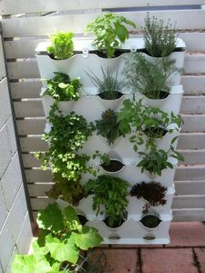 houseplants-easy-care-potted-plants-balcony-plant-herb-garden